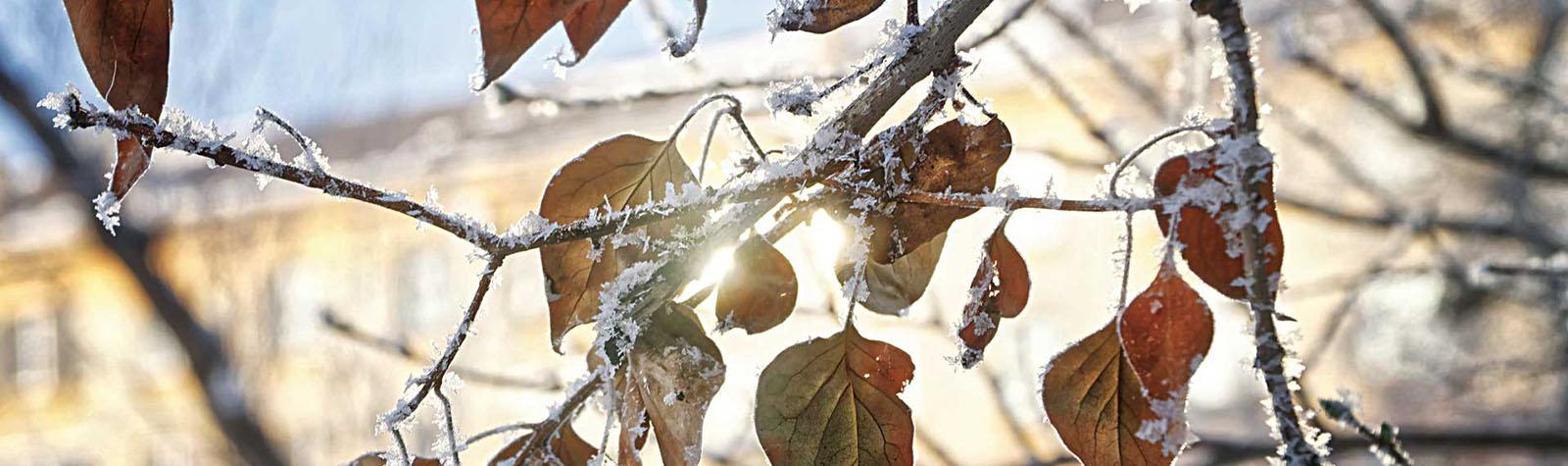 Nuova serie Winter Catalogo Cornici 2021